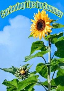 Gardening Tips for Summer