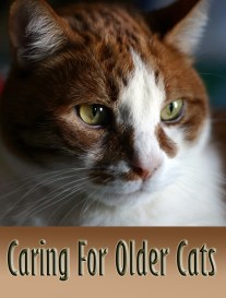 Caring For Older Cats