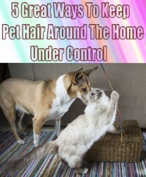5 Great Ways To Keep Pet Hair Around The Home Under Control