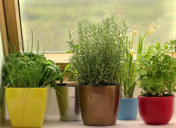 Quiet cornerindoor winter gardening tips quiet corner indoor winter gardening tips workwithnaturefo