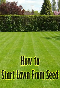 How to Start Lawn From Seed
