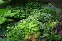 Plants That Add Structure to Shady Garden Beds
