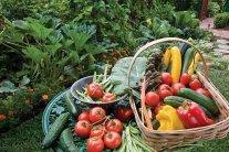 Growing fruit and vegetables - July