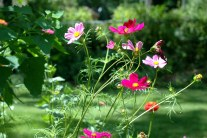 Gardening With Nature - Wildflower Garden