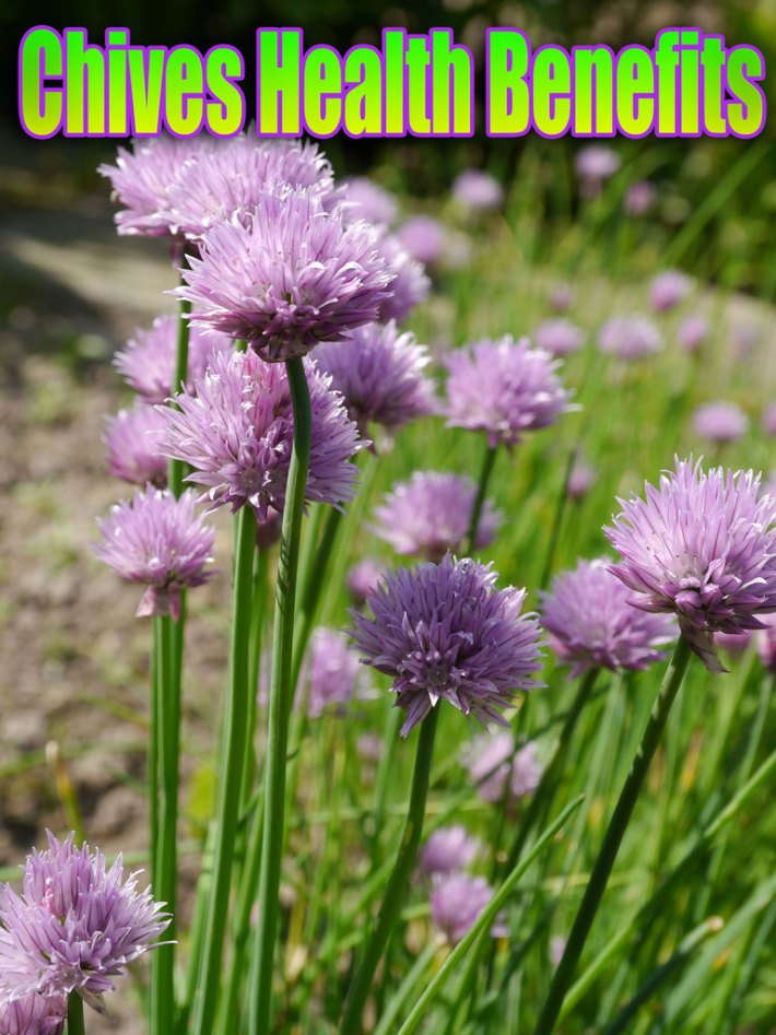 Chives Health Benefits