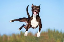 This One Happy Dog Won't Stop Jumping