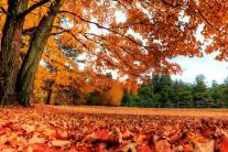 Tips to Make Fall Clean Up Easier