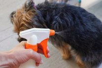 Homemade Natural Coat Freshener for Dogs