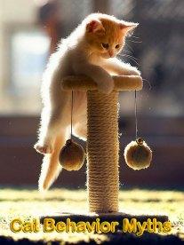 5 Common Cat Behavior Myths Debunked
