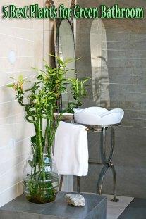 5 Best Plants for Green Bathroom