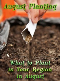 August Planting: What to Plant in Your Region in August