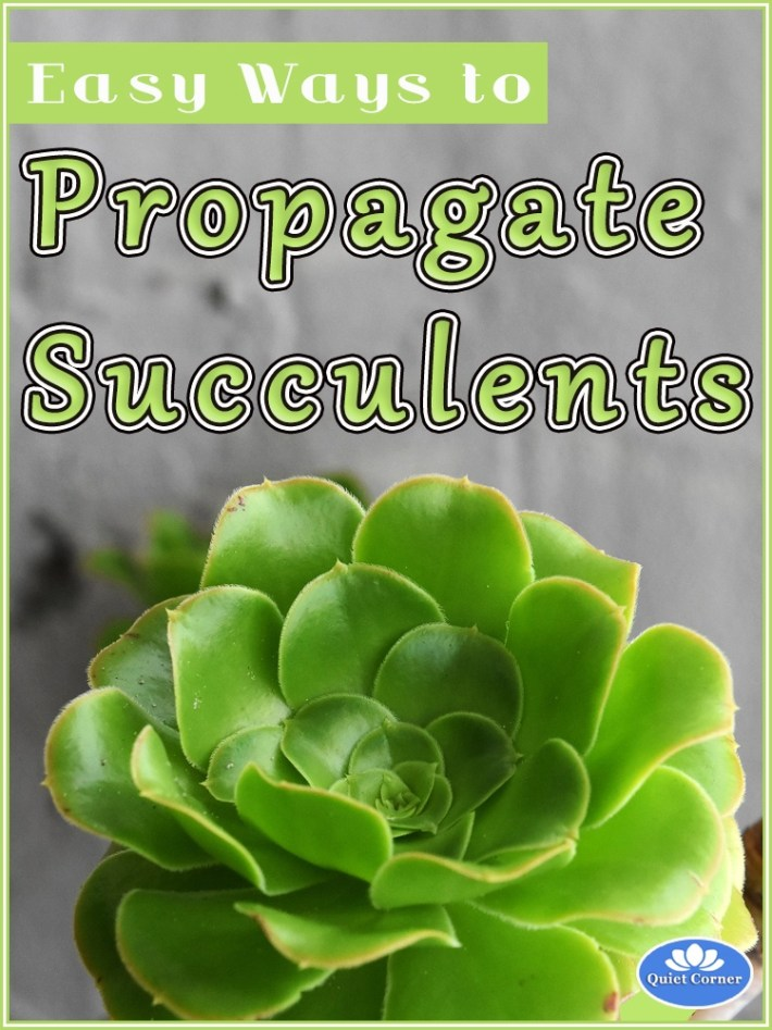 Easy Ways to Propagate Succulents