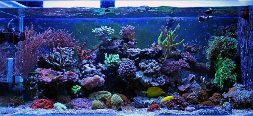 Aquarium Filter Noise Reduction