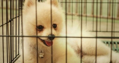 Why Use a Dog Crate