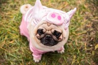 The Cutest Halloween Costumes for Pets - Margaritaville Blog