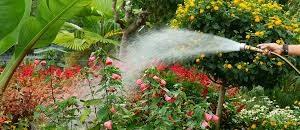 Flower maintenance Winder, Ga