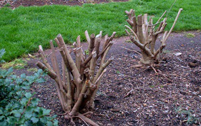 Bush pruning winder ga