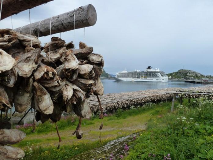 Local de seca de cabeças de bacalhau. Ilhas Lofoten