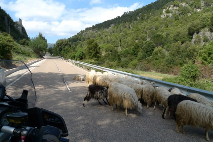 Sardenha mota moto animais na estrada