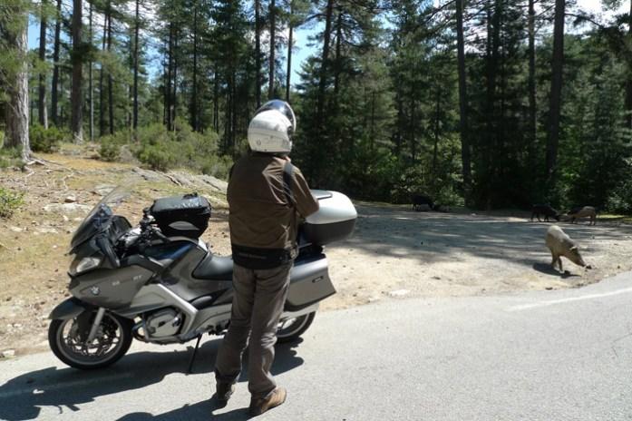 de mota col de vergio Pela estrada D84 na Forêt D'Aitone. Córsega