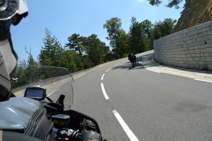 de mota pela col de vergio Pela estrada D84 na Forêt D'Aitone. Córsega