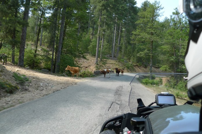De mota pela Corsega na Col de Vergio Pela estrada D84 na Forêt D'Aitone. Córsega