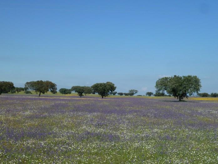 Pelas melhores estradas de Portugal. Alentejo durante a Primavera