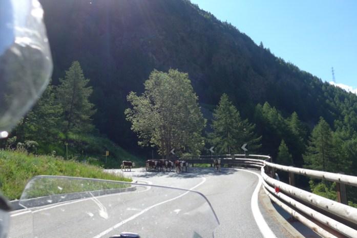 Animais na subida do Col du Grand Saint Bernard