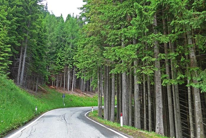 A passagem pelas florestas de abetos.
