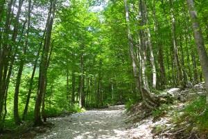 Slap Rinka, Logar Valley, Alpes Julianos, Eslovénia