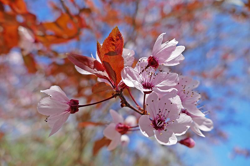 Primavera na Andaluzia