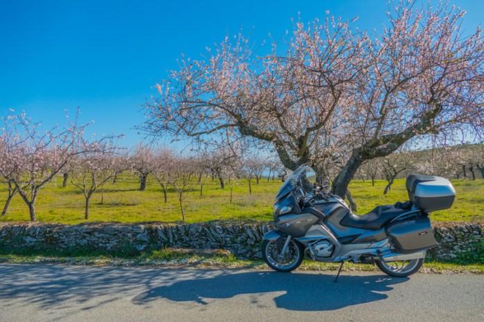 Rota das Amendoeiras em Flor