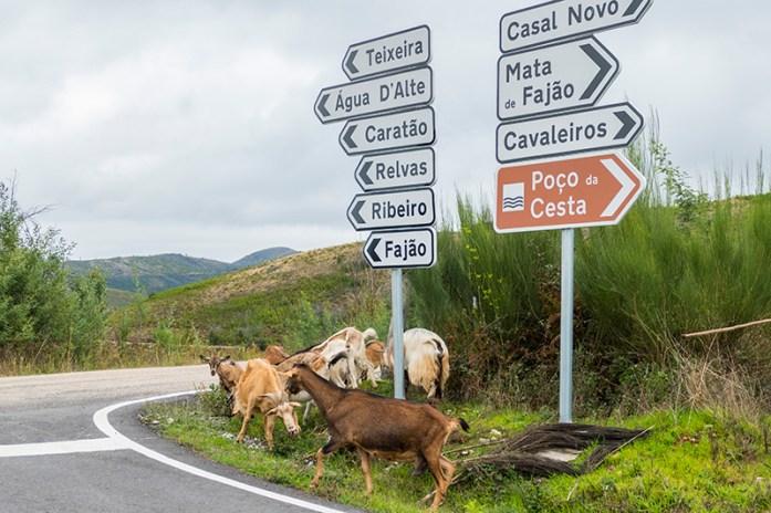 Estrada Panorâmica do Alto Ceira