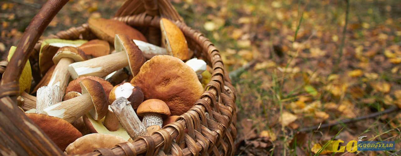 Cogumelos - Quilometrosquecontam