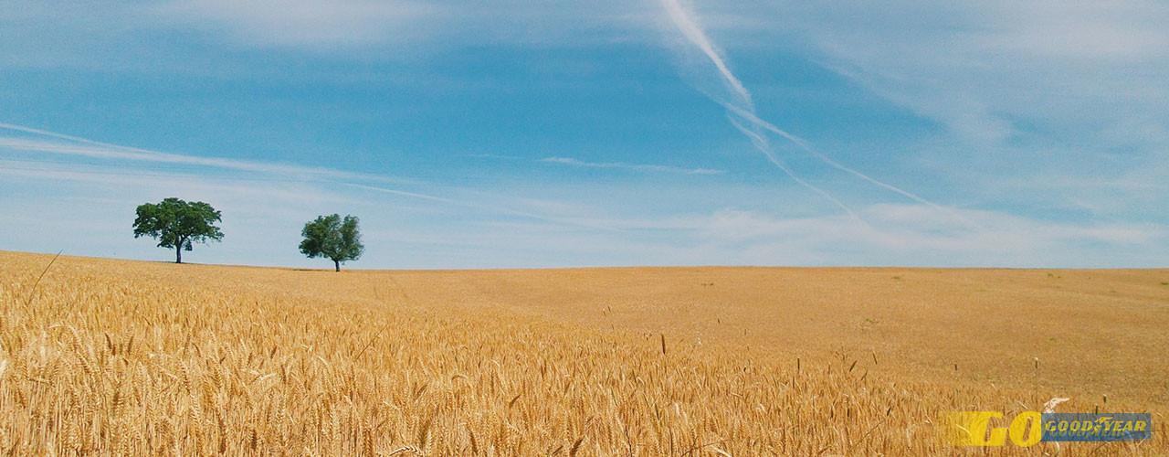 Alentejo paisagem - Quilometrosquecontam