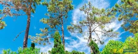 Vale do Lobo Algarve