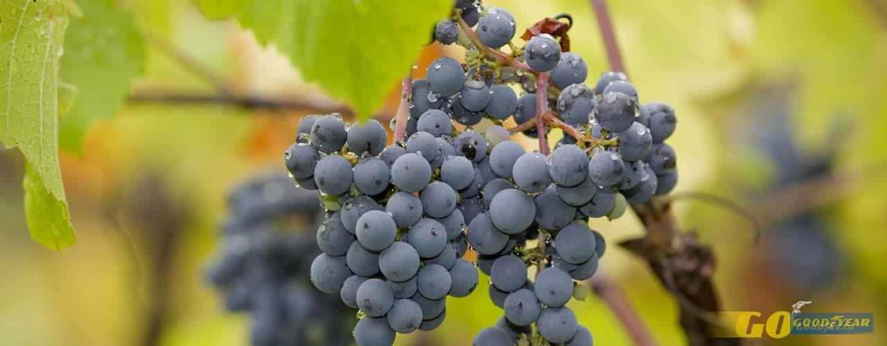 Felgueiras e a paixão do vinho verde