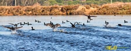 Destinos de natureza no Algarve sem se afastar do mar