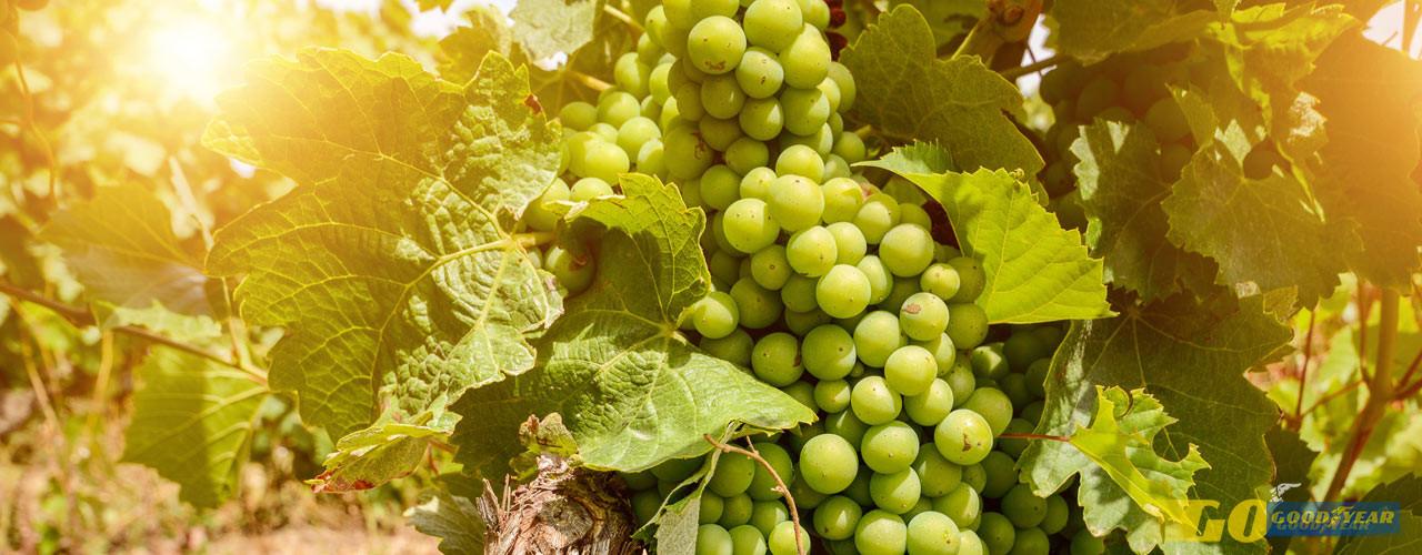 Portalegre, terroir mágico dos vinhos alentejanos