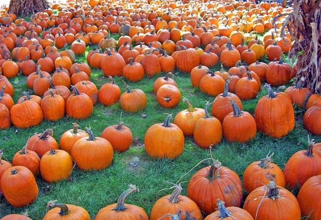 pumpkins-17848_1280