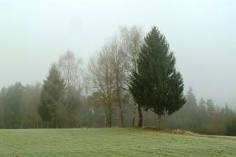 fog-543269_1920