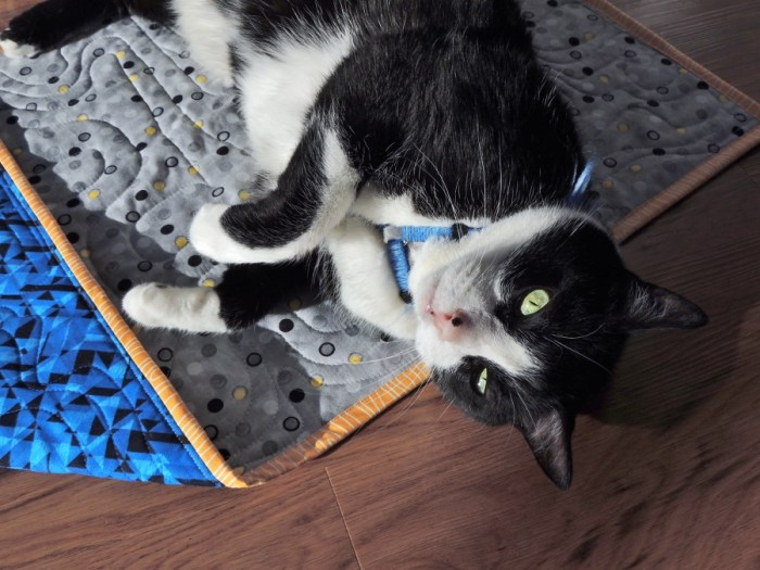 Puppy (the cat) Loves Quilts