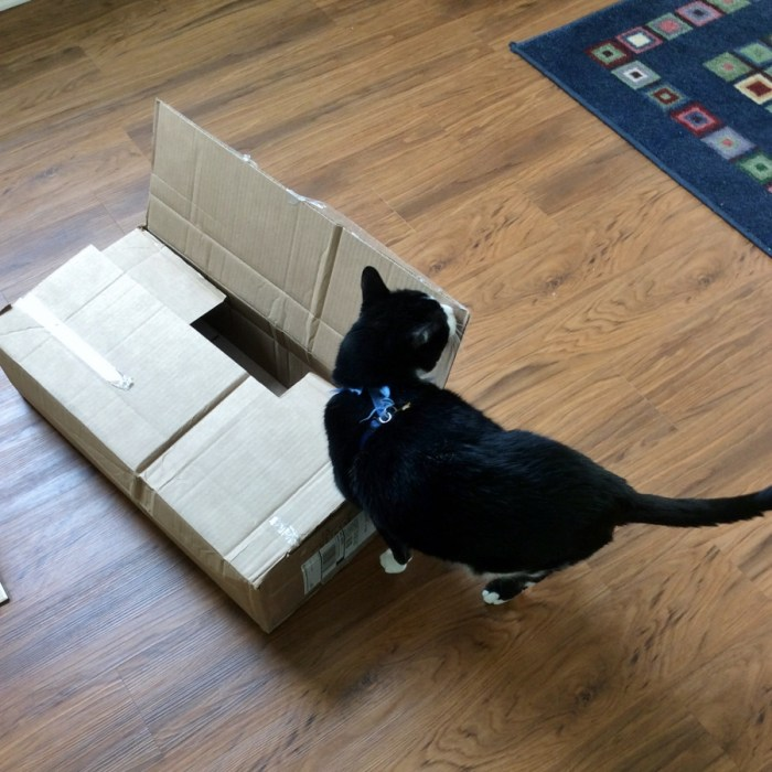 Distraction Technique - Boxes!