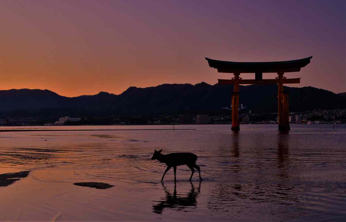 The floating Torii gate in Miyajima Japan