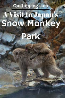 snow monkeys 3
