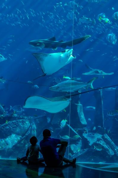 The aquarium was one of my favorite experiences on my holiday to Atlantis Dubai