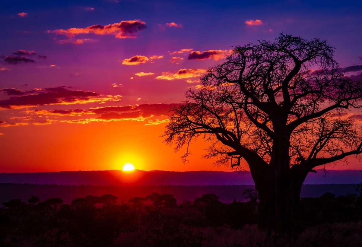 PhotoPOSTcard: A Baobab Sunset