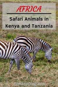 Sharing photos of all the varied animals and birds I encountered on safari in Kenya and Tanzania #safari  #africa #kenya #tanzani