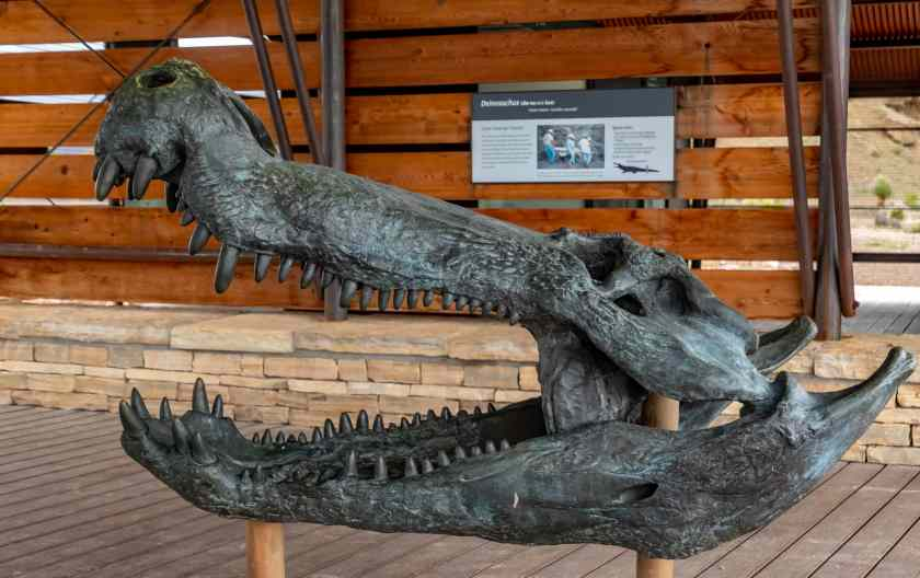 Fossil head of a Deinosuchus