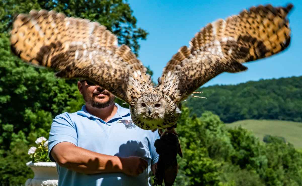 PhotoPOSTcard: The Great Eagle Owl